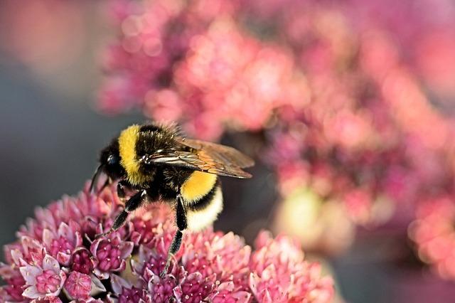 bumblebee-3647445_640
